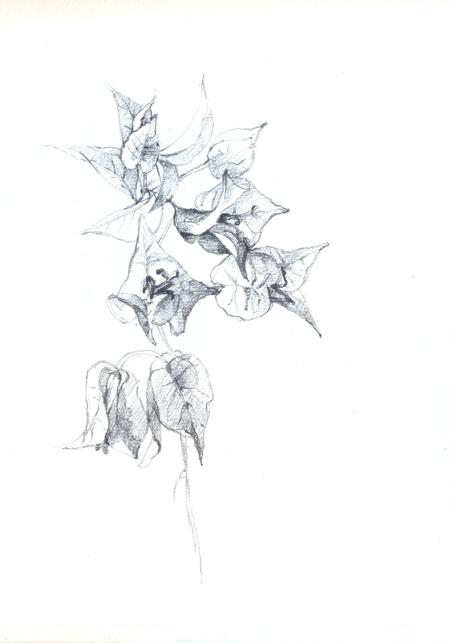 flores21