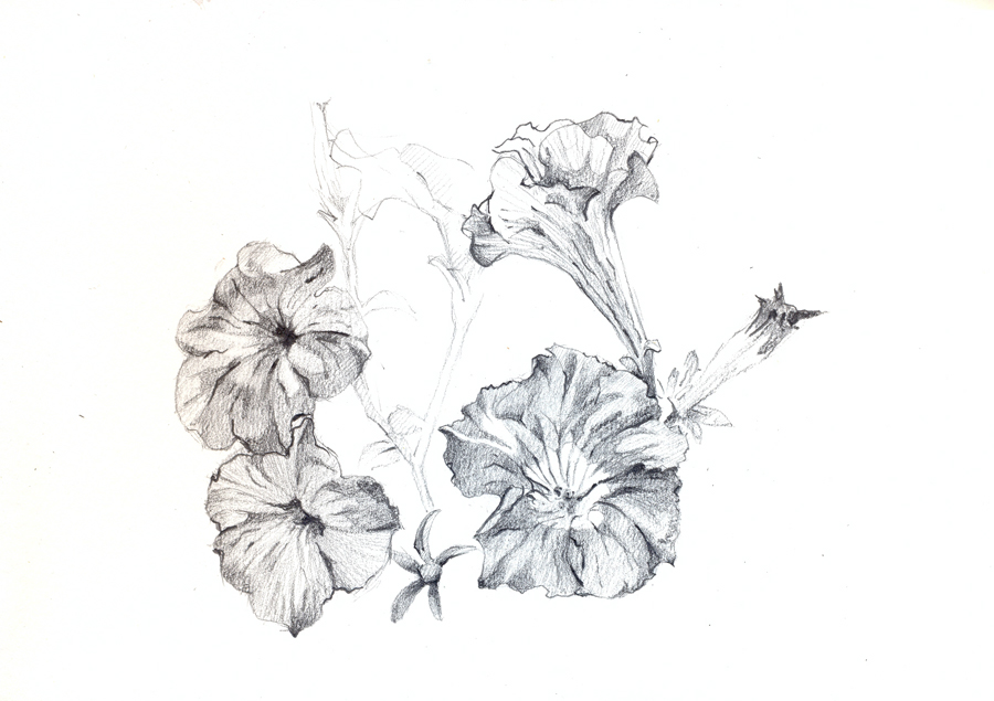 flores23