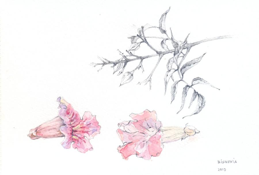 flores27