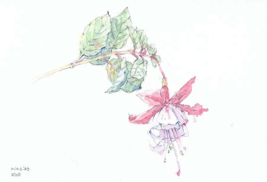 flores30