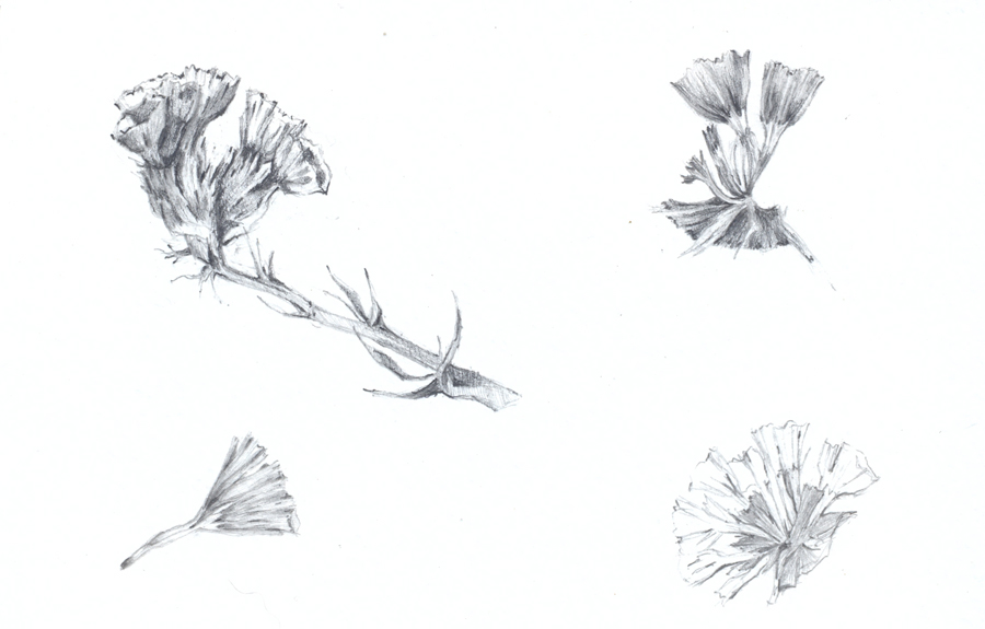 flores33
