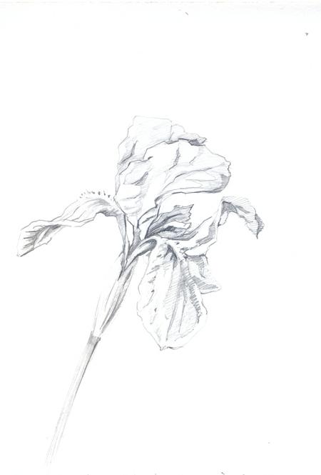 flores8
