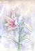 flores18